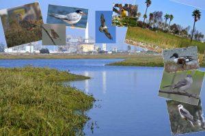 Los Cerritos Wetlands, SEASP