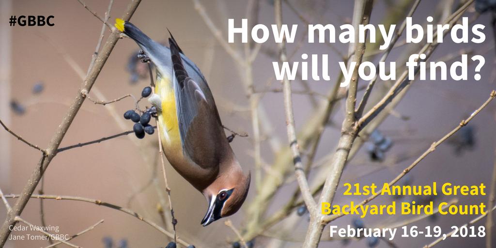 Great Backyard Bird Count! - El Dorado Audubon
