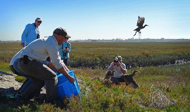 Seal Beach National Wildlife Refuge Update By Carolyn Vance